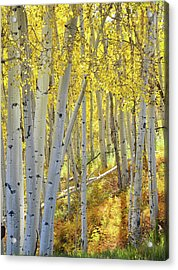Acrylic Print featuring the photograph Telluride Aspens by Ray Mathis