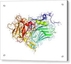 Tetanus Toxin C-fragment Structure Acrylic Print by Laguna Design