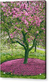 The Apple Doesn't Fall Far From The Tree Acrylic Print by Jessica Jenney