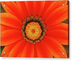 The Beauty Of Orange Acrylic Print by Lori Tambakis