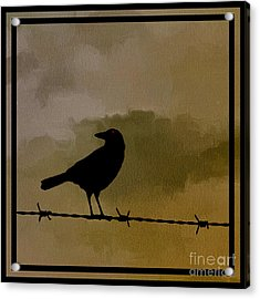 The Black Crow Knows Acrylic Print by Edward Fielding