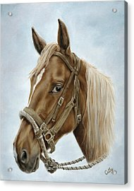 The Boss' Mount Acrylic Print by Cathy Cleveland