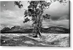 Acrylic Print featuring the photograph The Cazneaux Tree by Bill Robinson