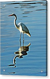 The Egret Acrylic Print
