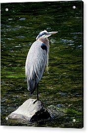 The Fisherman Acrylic Print