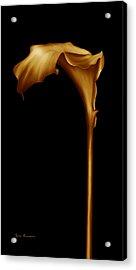 The Golden Calla Lilly Acrylic Print