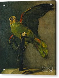 The Green Parrot Acrylic Print by Vincent Van Gogh