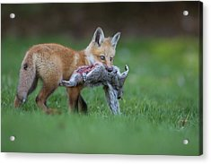 The Little Hunter Acrylic Print