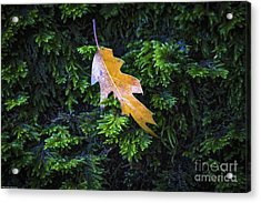 The Little Things Acrylic Print