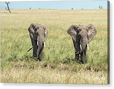 The Pair Acrylic Print