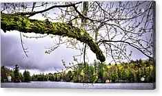 The Pond In Old Forge Acrylic Print by David Patterson
