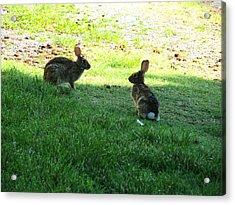 The Rabbit Dance Acrylic Print