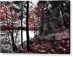 The Reds Of Autumn Acrylic Print by David Patterson
