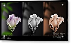 The Rose Acrylic Print by Clayton Bruster