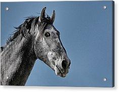 The Stallion Acrylic Print by Michael Mogensen