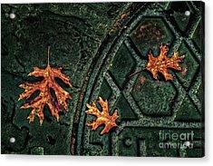 The Three Leaves Acrylic Print