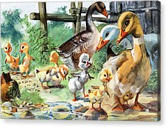 The Ugly Duckling Acrylic Print by English School