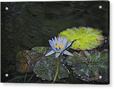The Water Lily Acrylic Print by Cendrine Marrouat