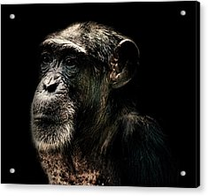 The Wise Acrylic Print by Martin Newman