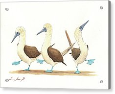 Three Blue Footed Boobies Acrylic Print