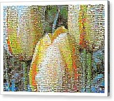 Three Yellow Tulips Acrylic Print