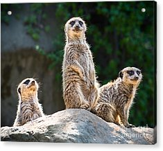 Three's Company Acrylic Print by Jamie Pham
