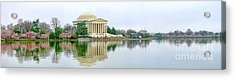 Tidal Basin With Cherry Blossoms Acrylic Print