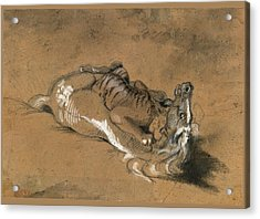 Tiger Attacking A Horse Acrylic Print by Antoine-Louis Barye