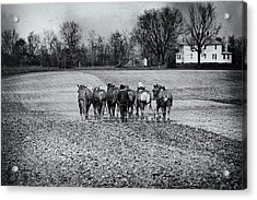 Tilling The Fields Acrylic Print