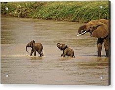 Tiny Elephants Acrylic Print