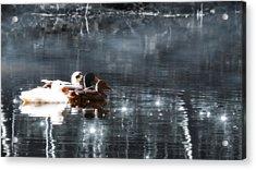 Together Acrylic Print by Wim Lanclus