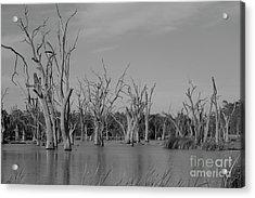 Acrylic Print featuring the photograph Tree Cemetery by Douglas Barnard