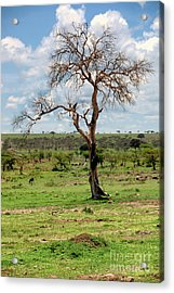 Acrylic Print featuring the photograph Tree by Charuhas Images