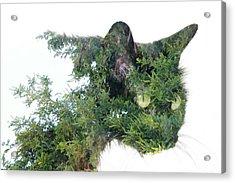 Tree Cat Acrylic Print
