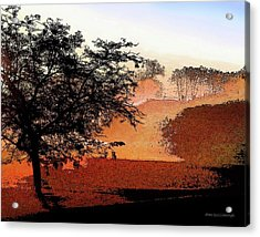 Tree In Morning Light Acrylic Print