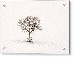 Tree Isolated In Winter. Auvergne. France Acrylic Print by Bernard Jaubert