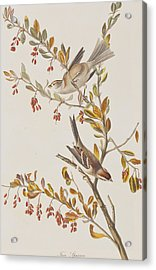 Tree Sparrow Acrylic Print by John James Audubon