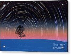 Tree With Star Trails Acrylic Print by Larry Landolfi