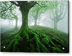 Land Of Roots Acrylic Print by Mikel Martinez de Osaba