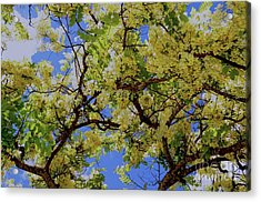 Acrylic Print featuring the photograph Trees And Flowers In Hawaii by D Davila