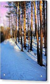 Trees Photography Acrylic Print by Mark Ashkenazi