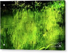 Trees Reflect In Water Acrylic Print