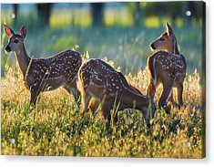 Triplets Acrylic Print