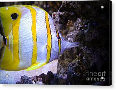 Tropical Fish Acrylic Print by Brenton Woodruff