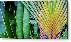 Tropical Palms Acrylic Print