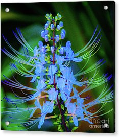Acrylic Print featuring the photograph Tropical Plants And Flowers In Hawaii by D Davila