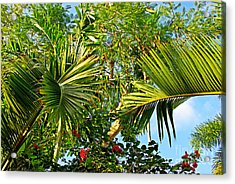 Tropical Plants Acrylic Print by Zalman Latzkovich