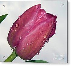 Acrylic Print featuring the photograph Tulip by Elvira Ladocki
