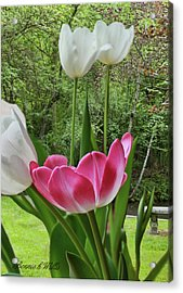 Acrylic Print featuring the photograph Tulips by Bonnie Willis