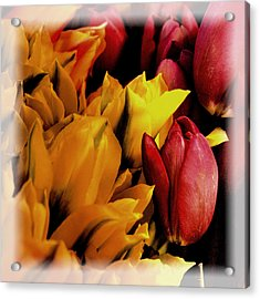 Tulips  Acrylic Print by David Patterson